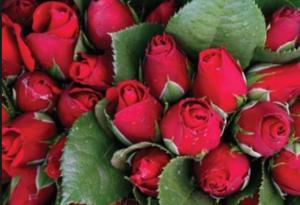 Like roses